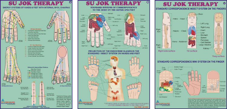 Sujok Therapy Chart-Set of 3 20x30