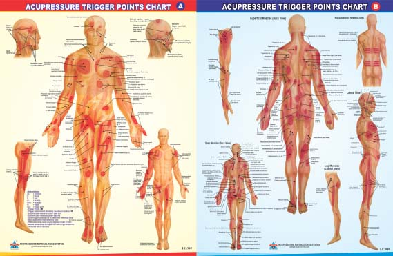 Acupressure  Trigger Points Chart  A  B